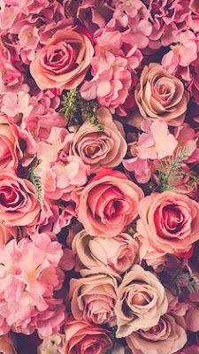 Imagem de rose, flowers, and pink iPhone wallpaper Wallpaper Iphone5, Floral Wallpaper Iphone, Cool Wallpaper, Wallpaper Ideas, Nature Wallpaper, Pink Flower Wallpaper, Iphone Wallpaper Vintage Hipster, Iphone Wallpaper Tumblr Aesthetic, Pretty Phone Wallpaper