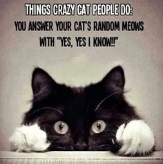 """It should be noted that attentive cat owners learn kitty language and answer their cats appropriately. Meows are not """"random."""" And yes, I'm a crazy cat lady. Crazy Cat Lady, Crazy Cats, Crazy Dog, Funny Cats And Dogs, Cats And Kittens, Funny Animals, Funniest Animals, Animal Funnies, Funny Kittens"""