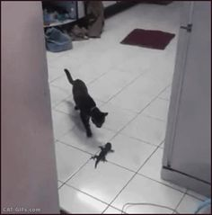 Animated Cat GIF • Curious Kitten scared of little lizard. Cat reflexe? OK, you're doing it right.