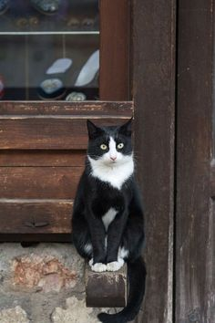 Tuxedo Cat Names Perfect Choice - Samoreals Cute Cats And Kittens, Cool Cats, Ragdoll Kittens, Funny Kittens, Bengal Cats, Adorable Kittens, Animals And Pets, Cute Animals, Animal Gato