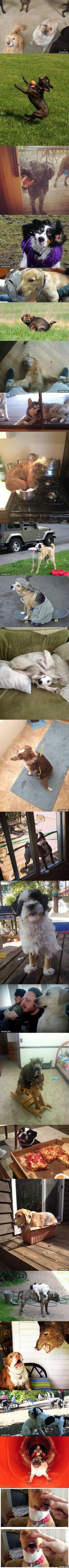 A hilarious compilation of awkward dog photos.
