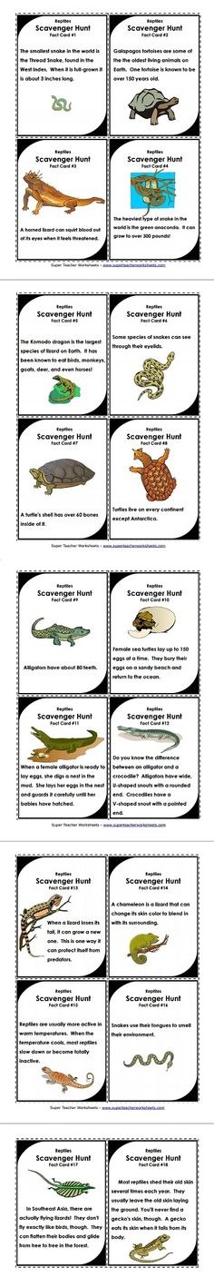 Reptiles Scavenger Hunt Game - finding the fact cards is probably a lot better than finding the actual reptiles! Check them out!