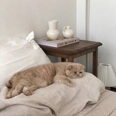 kinda just wanna write a book cats pets cute I Love Cats, Crazy Cats, Cute Cats, Animals And Pets, Baby Animals, Cute Animals, Fluffy Animals, Chat Beige, Photo Chat
