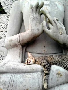 Cat-napping in the lap of Buddha = Nirvana ;)