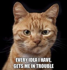 Every cat I've ever had...
