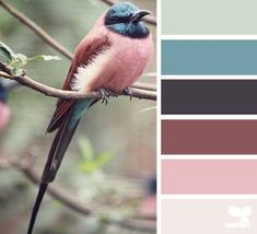These Soothing Color Swatches are Inspired by Nature Photography #interiordesign trendhunter.com
