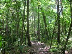 FLORIDA: Florida Hikes! | Hike the trails of Florida |