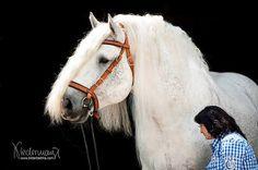 Massive draft horse