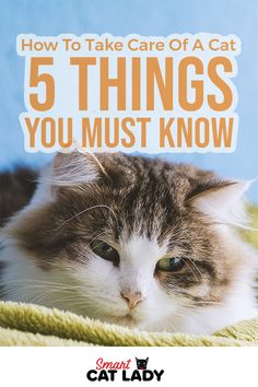 Here are five things you must know on how to take care of a cat for the first time.    #cat #tips #raising