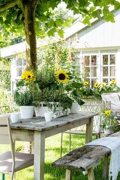 Buitenleven | Zonnetje in de tuin met de Zonnebloem - Woonblog StijlvolStyling.com