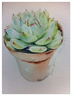 ~Echeveria ~weibo.com :)