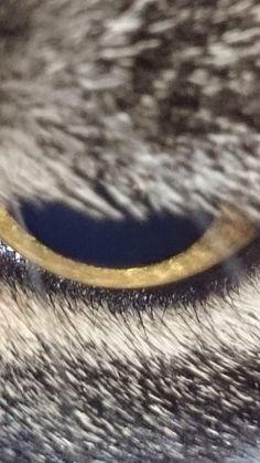 Catseye by Jcduub on 500px