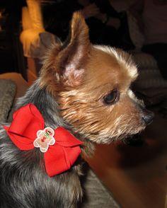 Tinks Christmas Collar