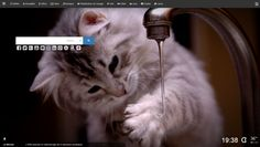 Post with 1 votes and 11 views. Shared by wiinkz. Cats Wallpapers in Wiinkz New Tab Cat Wallpaper, Trending Memes, Cute Cats, Funny Jokes, Wallpapers, Album, Animals, Pretty Cats, Animales