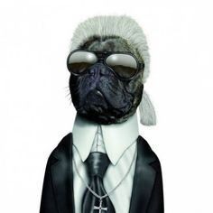 Perro con cara de Karl Lagerfeld