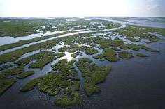 pictures of louisiana coastal plain - Google Search