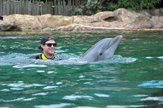 Tampa Bay Rays outfielder Wil Myers takes a swim with a dolphin at Discovery Cove Orlando on his day off. His girlfriend was in town from North Carolina & wanted to see the dolphins.