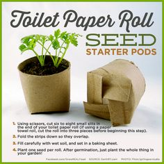 Toilet Paper Roll Seed Starter Pods | save money by making your own seed starter pods using toilet rolls or paper towel rolls