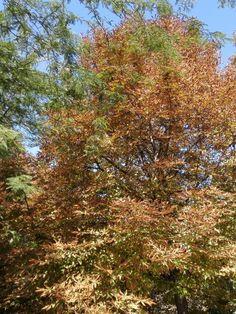 #otoño in #love