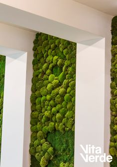 Moss walls are an interior decor trend nowadays, but they have been used for that purpose much longer! Did you know that a thousand years ago Zen Buddhist monks of Japan cultivated moss that grew on stones and walls in their temple gardens?