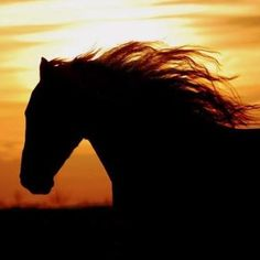 Fabulous Sunset Silhouetting a Beautiful Mustang.