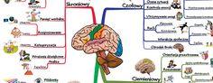 mozg_funkcje_jak_sie_uczyc_skutecznie