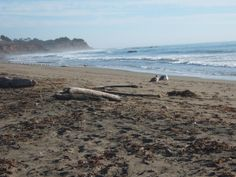 San Simeon State Park Campground.  San Simeon State Beach looking south toward Cambria