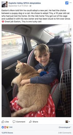 Mom tells boy he can pick any animal at shelter. He picked this elderly, overweight and shy cat - Mom tells boy he can pick any animal at shelter. He picked this elderly, overweight and shy cat - Cute Funny Animals, Cute Baby Animals, Funny Cute, Animals And Pets, Cute Cats, Adorable Kittens, Wild Animals, Old Cats, Cats And Kittens
