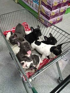 This basket of pups. | 42 Pictures That Will Restore Your Faith In Cute