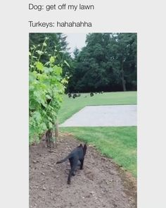Cute Little Animals, Cute Funny Animals, Funny Cute, Hilarious, Animal Jokes, Funny Animal Memes, Cute Dogs And Puppies, Doggies, Cute Animal Pictures