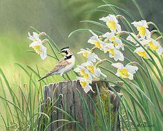 Horned Lark & Daffodils  Original Painting by Susan Bourdet