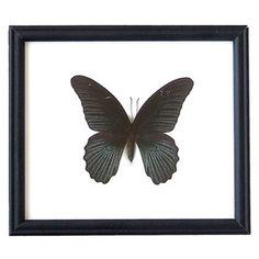 Schmetterling Great Mormon III, 29€, jetzt auf Fab.
