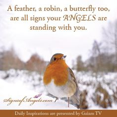 a feather a robin a butterfly too - Google Search