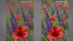 Know The Difference Between Correct Exposure And Creatively Correct Exposure
