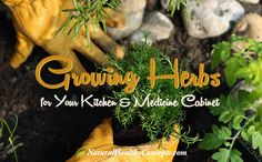 Growing Herbs for your kitchen and medicine cabinet