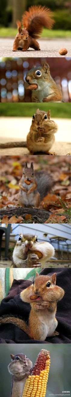squirrels, and nuts!