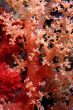 Beautiful Branching sea coral Love Moments