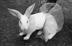 They said this bunny didn't have the feet to be a ballerina, but that didn't mean it couldn't wear a tutu! (1965) | Florida Memory