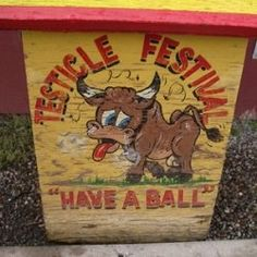 Eating bull testicles (or sheep, pig, goat, or even turkey) is no new thing. They have long been a delicacy and, now, Testicle Festivals are growing...