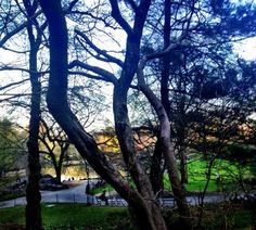 Twitter / Sarah_EmilyE: Central Park is a magical place! ...