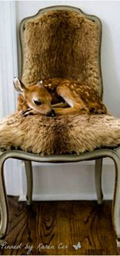 """Oh deer. But I don't want to start a new board called """"must love deer"""". Cute Baby Animals, Animals And Pets, Wild Animals, Funny Animals, Beautiful Creatures, Animals Beautiful, Oh Deer, Tier Fotos, Pet Birds"""