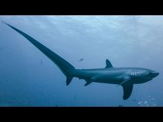 The Coolest Sharks In The World