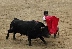 #Requena · 14 febrero · Duque corta dos orejas a su novillo en pleno vendaval @burladero