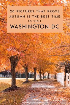 Fall is my favorite time of year in Washington DC! The weather is no longer humid yet not cold yet and the leaves turn fiery gold and red! See why fall is the best time to visit Washington DC Travel Washington Things To Do, Washington Dc Area, Usa Travel Guide, Travel Usa, Travel Tips, Beach Travel, Budget Travel, Travel Guides, Travel Destinations