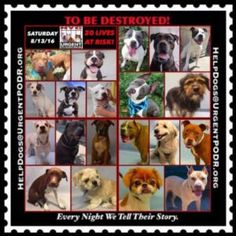 """20 BEAUTIFUL LIVES TO BE DESTROYED 08/13/16 @ NYC ACC. ***ACC is continuing to Clear the Shelter*** This is a HIGH KILL """"CARE CENTER"""". Too many great dogs put down daily! Babies, puppies, mamas, healthy, friendly dogs. POOR LIVING CONDITIONS & MINIMAL CARE. Please Share! Click for info & Current Status : http://nycdogs.urgentpodr.org/to-be-destroyed/"""
