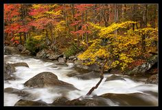 Ramsey Cascade I Ramsey Cascades, Great Smoky Mountains, Painting, Color, Painting Art, Paintings, Colour, Painted Canvas, Smoky Mountain