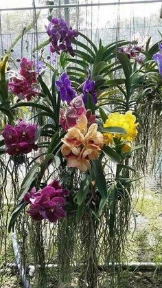 orchids for dummies Hanging Plants, Planting Flowers, Pretty Plants, Plants, Cymbidium Orchids Care, Beautiful Flowers, Beautiful Orchids, Flowers Nature, Trees To Plant