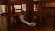 My cat is cute but weird https://www.youtube.com/watch?v=XUn4uKruWVA&feature=share