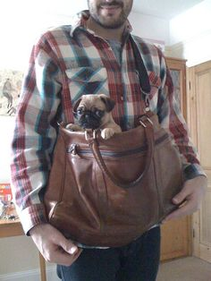 I want a puggle! Wonder if Fred would carry him around like this...probably not, but the thought is nice...lol...