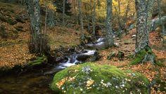 Senda ecológica del Abedular de Canencia. Sierra de Guadarrama // Madrid